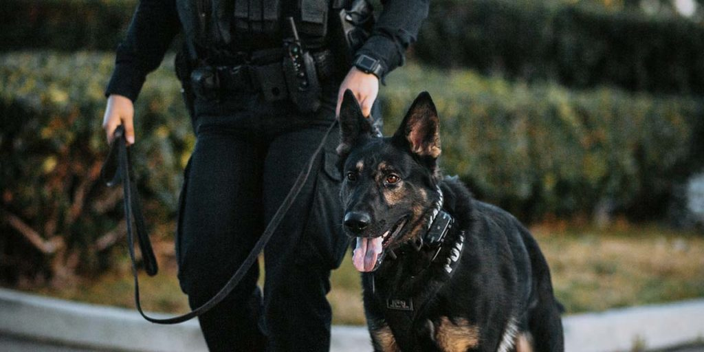 We train k9 dogs for police work.