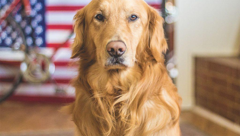 Bay area service dog training
