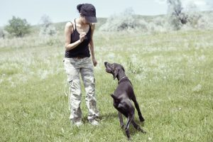 To run a successful dog training business, you need strong marketing.