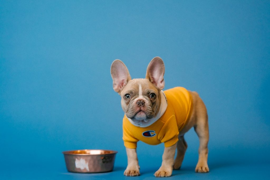 How to make your dog eat his food?