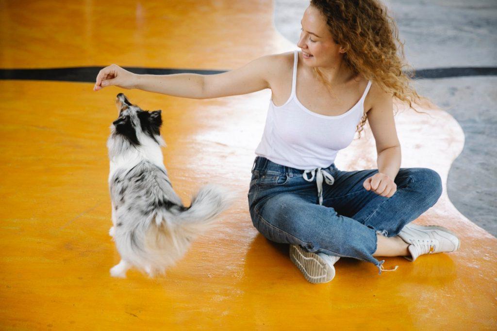 Force-free dog training