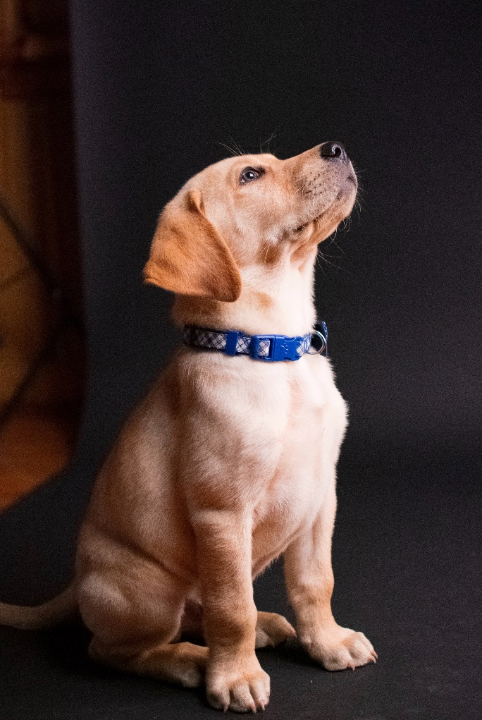 Different ways to help a traumatized dogs