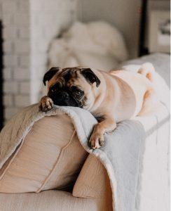 How to help a traumatized dog?